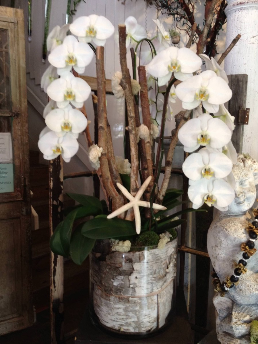 nisies-enchanted-florist-orange-county-orchids-7