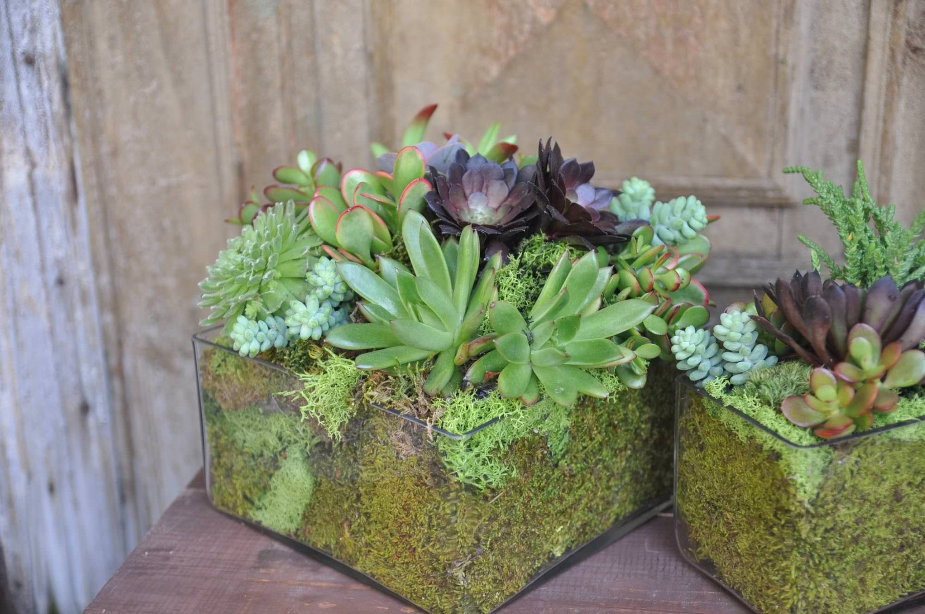 nisies-enchanted-florist-orange-county-succulents-11